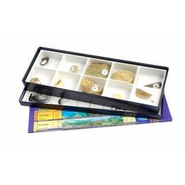 Petite collection paléontologique