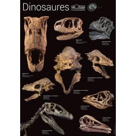 Poster de fossiles de dinosaures
