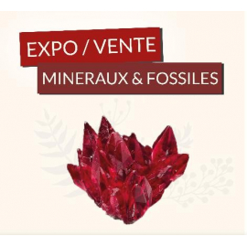 Dates des differentes expositions de mai