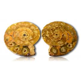 Ammonite polie