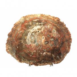 Fossiles et bois fossile